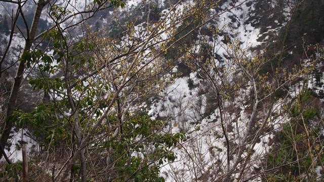 2021.2.26金鉢山から松平山.jpg14.jpg